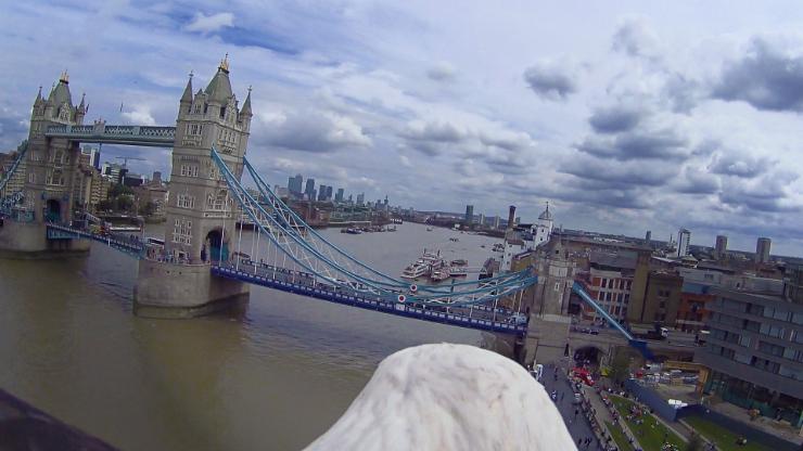 Eagle Cam - Tower Bridge